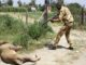 Video of KWS officer killing a lion in Isinya