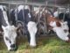 Best Colleges offering Dairy Farming Technology Course in Kenya