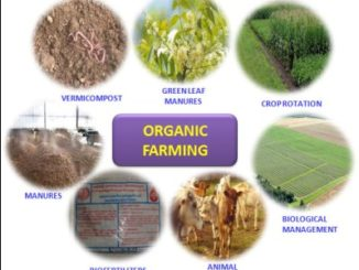 Best Organic Farming, Crop Improvement & Protection Colleges - Diploma